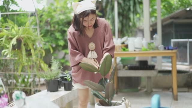 ws asiatisk kvinna rengöring gummi växt blad på bakgården - endast unga kvinnor bildbanksvideor och videomaterial från bakom kulisserna