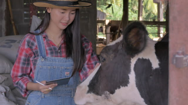 asian woman farmer using digital tablet in cattle. small business owner successful in milk product - milk cow stock videos & royalty-free footage