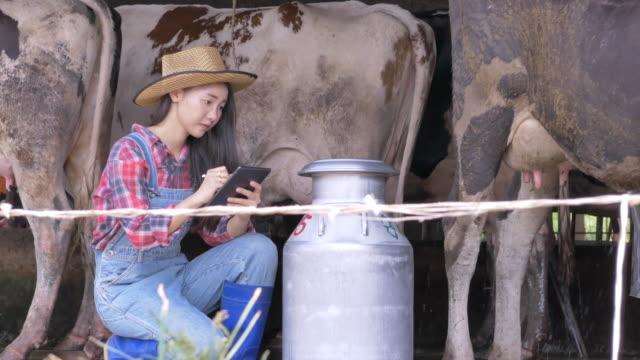 stockvideo's en b-roll-footage met aziatische vrouw boer met behulp van digitale tablet bij runderen. eigenaar van kleine bedrijven succesvol in melkproduct - dairy product