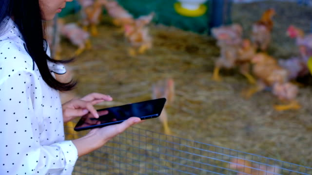 vídeos de stock e filmes b-roll de asian woman farmer with a digital tablet in chickens farm, smart agriculture and technology concept - galinha ave doméstica