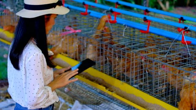 vídeos de stock e filmes b-roll de asian woman farmer with a digital tablet in chickens farm, smart agriculture and technology concept - filhote de animal