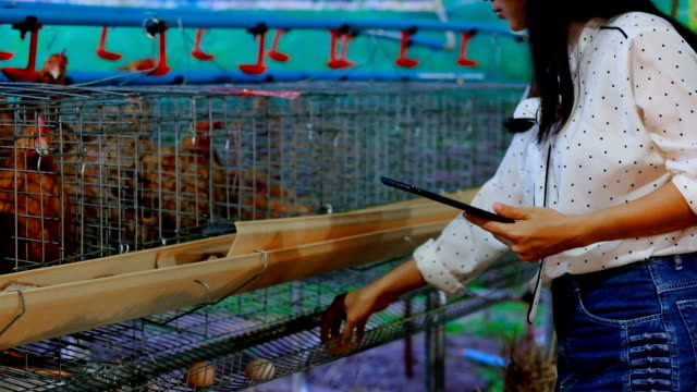 asian woman farmer with a digital tablet in chickens farm, smart agriculture and technology concept - chicken bird stock videos and b-roll footage