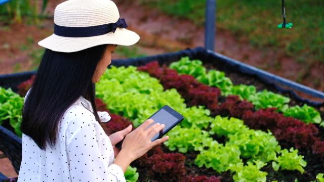 asiatische frau bauer mit a digital tablet in the field, intelligente landwirtschaft und technologie-konzept - landwirtschaft stock-videos und b-roll-filmmaterial
