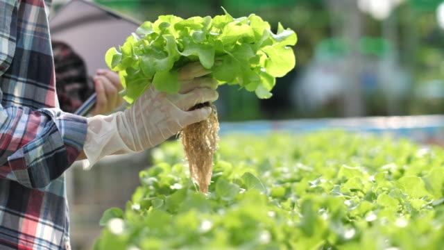 vídeos y material grabado en eventos de stock de mujer asiática agricultora trabajando con tableta digital en granja hidropónica - hidropónica