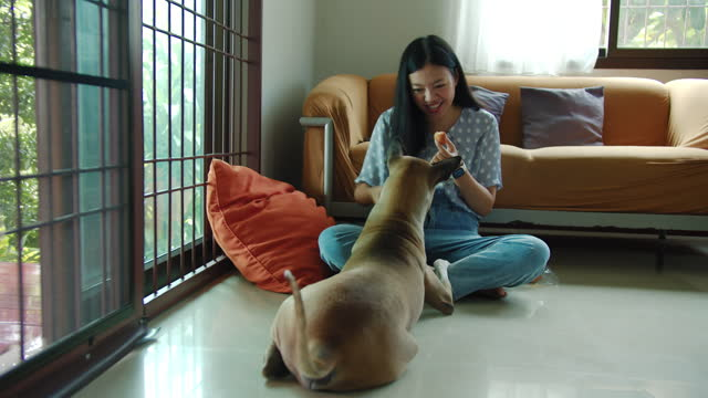 asian woman feeding dog and training with dog at home.concept of adoption stray dogs to have a new owner that love and can take care of them.4k slow motion. - take that stock videos & royalty-free footage