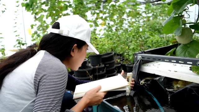 vidéos et rushes de jardinier de femme asiatique vérifiant l'eau dans les plantes de serre melons - culture hydroponique