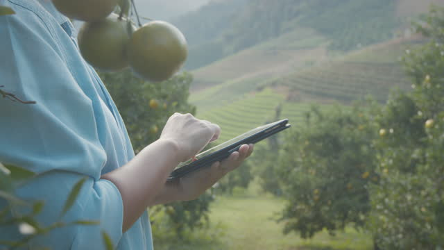 asian woman gardener using digital tablet checking her plant and checking information on the crops in the oranges field garden with slow motion shot. - orchard stock videos & royalty-free footage