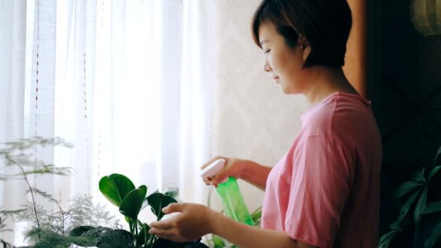 stockvideo's en b-roll-footage met aziatische vrouwen die in huis tuinieren - kamerplant