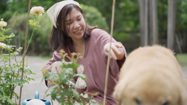 asiatische frau wurde durch goldener retriever während der pflanzenarbeit gestört - haarschmuck stock-videos und b-roll-filmmaterial
