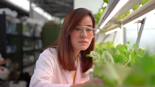 asian woman harvesting fresh vegetables in hydro farm - renewable energy stock videos & royalty-free footage