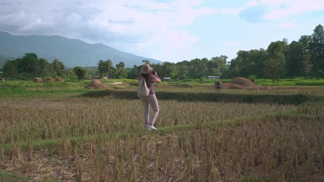 vidéos et rushes de femme asiatique ont l'effort de prendre une photo de buffle d'eau domestique sur de la rizières sous le coucher du soleil dans la scène de l'agriculture non urbaine, chaîne de montagnes, le nord de la thaïlande avec se sentir excité, émotion po - non urban scene