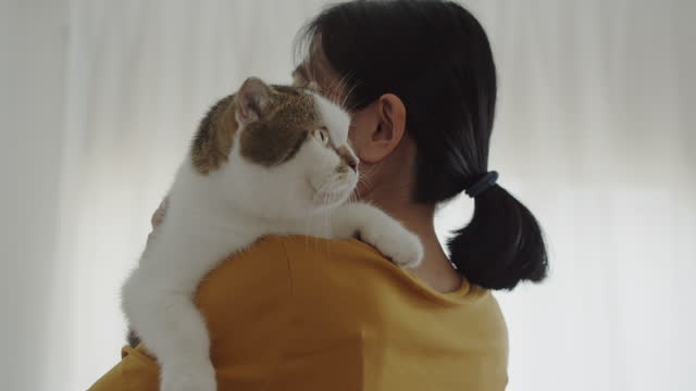 asian woman holding and cuddling her cat in comfort. - carrying stock videos & royalty-free footage