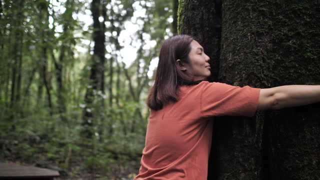 asian woman hug a tree in forest, environmental conservation concept - tree trunk stock videos & royalty-free footage