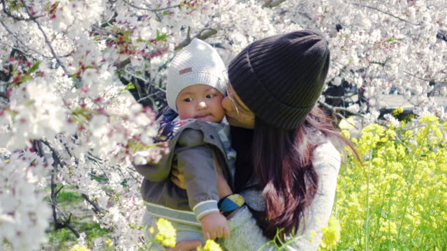 asian woman kiss her baby are under cherry blossoms - japanese mom stock videos & royalty-free footage