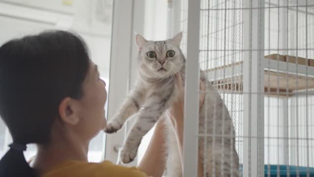 vidéos et rushes de femme asiatique ouvrant une cage, caressant et retenant un chat mignon à l'abri d'animal familier. - adoption