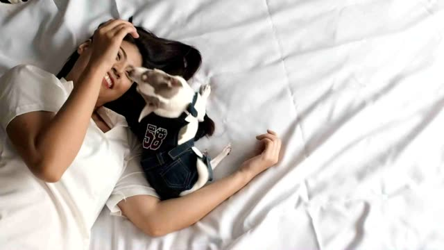 asian woman playing with chihuahua dog on bed - perro stock videos & royalty-free footage