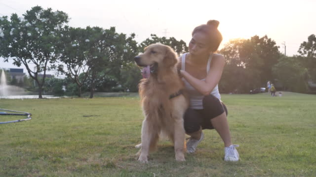 asian woman playing with dog in public park - pets stock videos & royalty-free footage