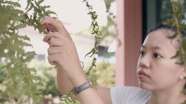 asian woman pruning and trim green leaves in backyard garden home with pruning shears.4k slow motion. - repairing stock videos & royalty-free footage