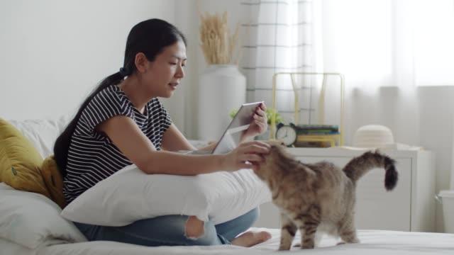 vídeos de stock, filmes e b-roll de mulher asiática acariciando um gato tabby enquanto chamada de vídeo on-line no laptop. - acariciar