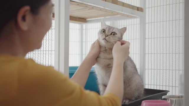猫養子縁組センターの避難所のケージでかわいい子猫をなでてさびるアジアの女性 - 迷子の動物点の映像素材/bロール