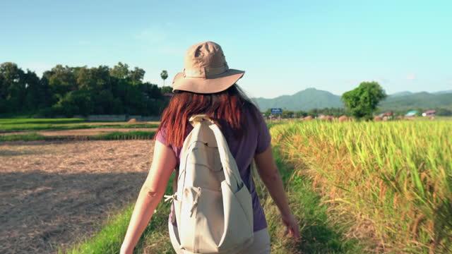 vidéos et rushes de femme asiatique marchant sur la crête du riz paddy entre l'oreille de riz et le riz récolté sous le coucher du soleil dans une scène agricole non urbaine, le nord de la thaïlande - non urban scene