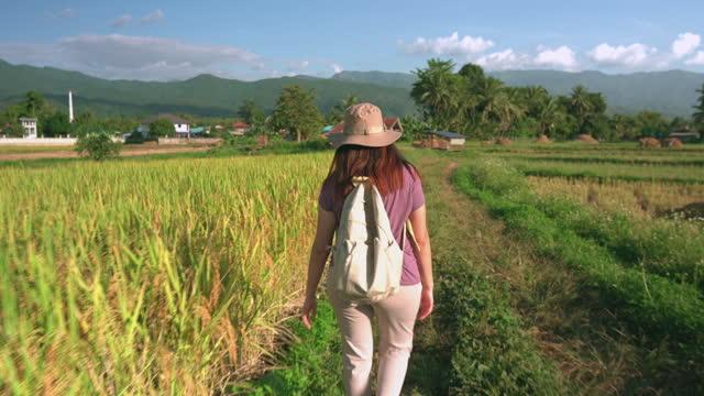 vidéos et rushes de femme asiatique marchant avec vitesse sur la crête du riz paddy entre l'oreille de riz et le riz récolté sous le coucher du soleil dans une scène agricole non urbaine, le nord de la thaïlande avec un sentiment excité, émotion positive - non urban scene