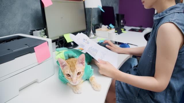 asiatische frau arbeiten zu hause mit einem haustier katze. - klein stock-videos und b-roll-filmmaterial