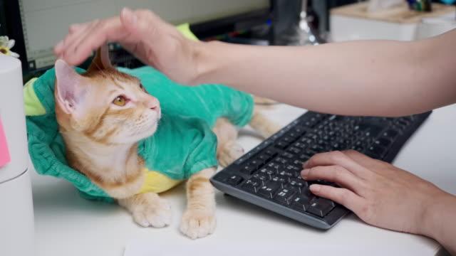vídeos de stock e filmes b-roll de asian woman work at home with a pet cat. - trabalhadora de colarinho branco