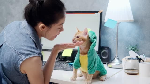 vídeos y material grabado en eventos de stock de mujer asiática trabaja en casa con un gato mascota. - herramientas profesionales