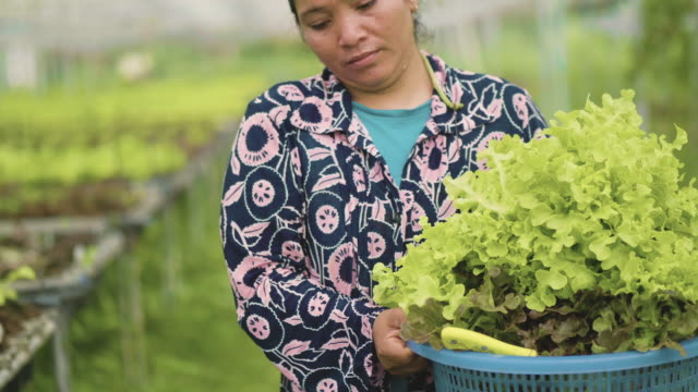 asian woman working with seedlings in greenhouse - plantation stock videos & royalty-free footage
