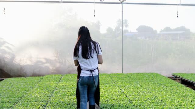 vídeos y material grabado en eventos de stock de mujeres asiáticas agrícolas uso de tecnología como tabletas o portátiles para trabajar en campos agrícolas - oficio agrícola