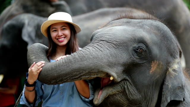 asian women enjoy elephant, slow motion - chiang mai province stock videos & royalty-free footage