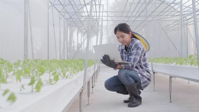 asian women farmer working digital tablet in greenhouse - pride stock videos & royalty-free footage