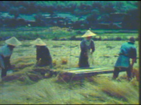 asian workers harvesting rice in a field - 歴史点の映像素材/bロール