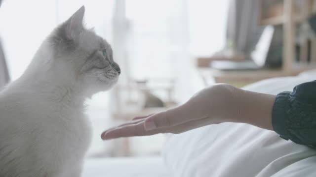 vídeos de stock e filmes b-roll de asian young woman feeding with cat. - fofo texturizado