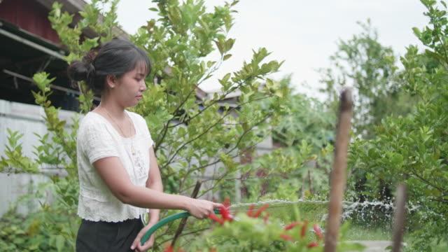 アジア系の若い女性が木の上に水をまきます。 - 吹きかける点の映像素材/bロール