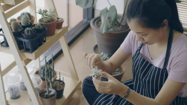 asian young woman wearing apron caring for green indoor plant at home.new normal lifestyle concept of hobby during quarantine and social distancing to stop spread disease of coronavirus.4k slow motion. - hobbies stock videos & royalty-free footage