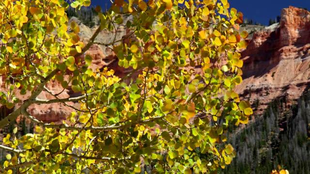 aspen leaves - グランドステアケースエスカランテ国定公園点の映像素材/bロール