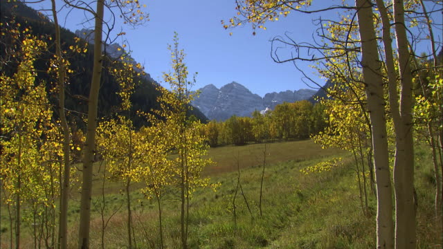Aspen trees frame the distant mountains of Maroon Bells in Colorado.