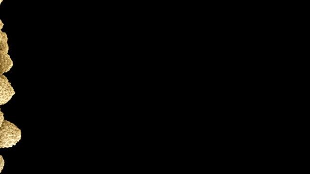 Aspergillus fungus, SEM