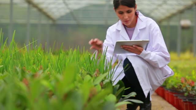 vídeos de stock e filmes b-roll de assistant using tablet pc to check plants - cientista