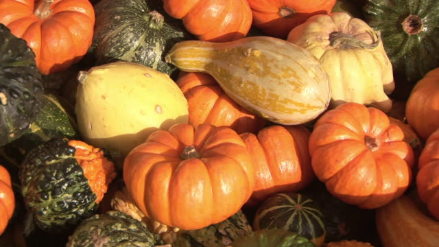 CU, ZI,  Assorted pumpkins, Washington State, USA