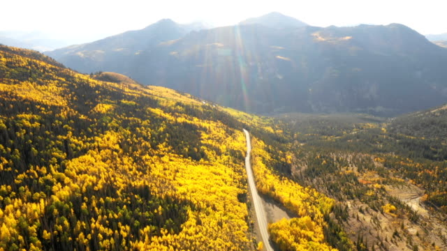 astounding views of aspens in bloom by drone - aspen tree stock videos & royalty-free footage