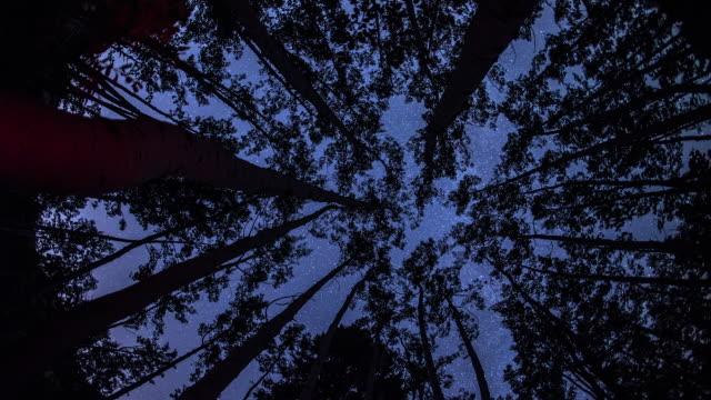 Astro Timelapse through trees.