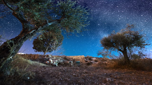vídeos de stock, filmes e b-roll de astro time-lapse with olive trees in bethlehem, israel - jerusalém