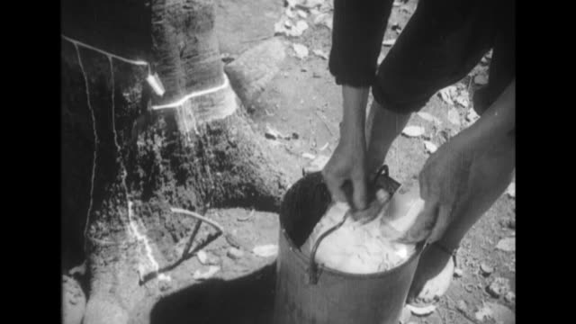 vídeos de stock, filmes e b-roll de at a rubber plantation in hongcan workers collect sap from rubber trees then transport the sap in buckets on sway poles to a factory where it is put... - borracha material