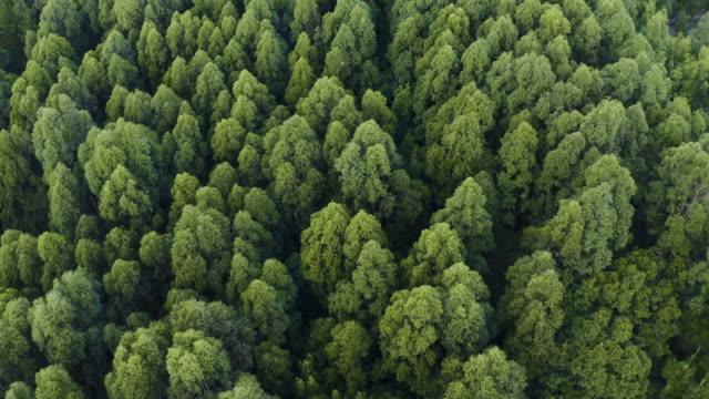 a casa tra gli alberi - super slow motion video stock e b–roll