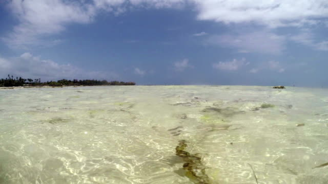 at surface of the sea - zanzibar - pjphoto69 stock videos & royalty-free footage