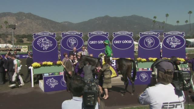atmosphere at the breeders' cup world championships day one at los angeles ca - championships stock videos & royalty-free footage