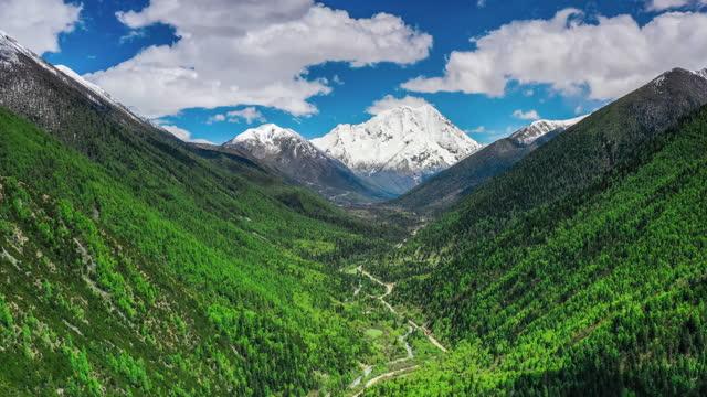 森の端には雪山が立っている - 生い茂る点の映像素材/bロール